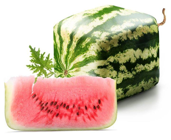 On retrouve des melons carrés au Japon